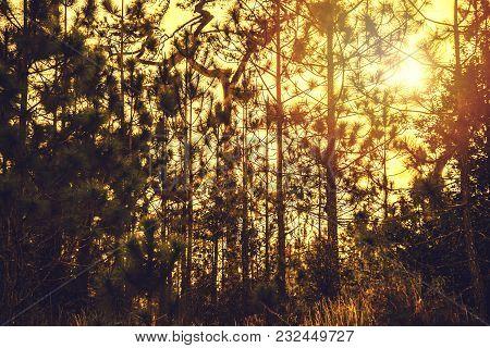 Natural Background Of Green Leaves. Background Asplenium Nidus
