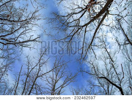 Trees In The Snow-covered Forest, Snow In The Trees, Snowdrifts, Traces In The Snow, Sunlight Throug