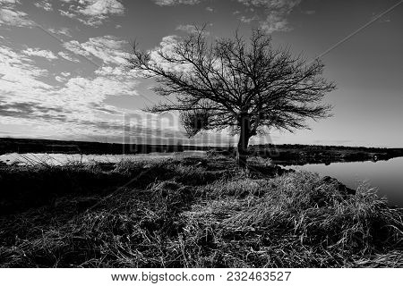 A Scenic B&w Image Of A Barren Tree By The Water At Scooteny Reservoir Near Othello, Washington.