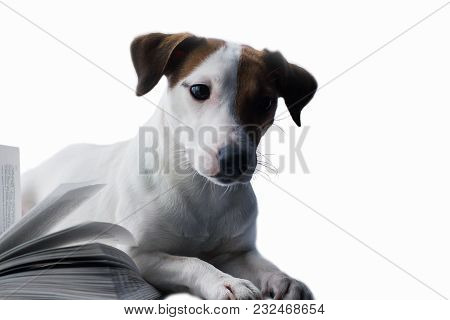 Jack Russell And Book On An Isolated Background