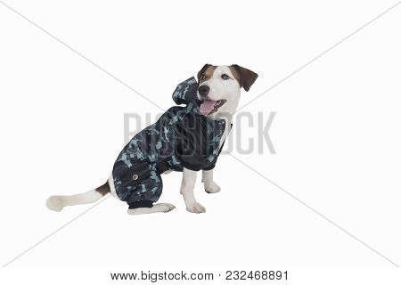 The Bjack Russell Clothing On Isolated Background