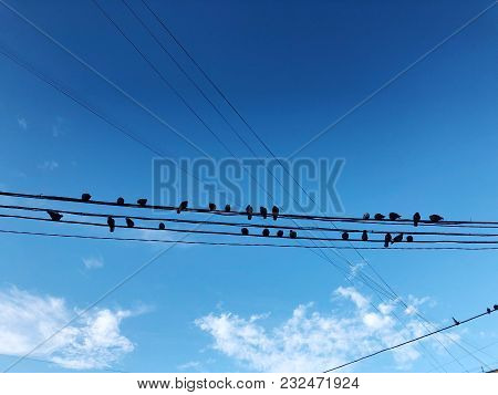 Pigeons Sit On Wires On Blue Sky Background