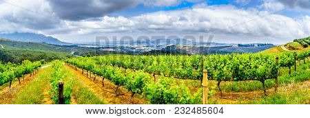 Olive Groves And Vineyards Surrounded By Mountains Along The Helshoogte Road Between The Historic To