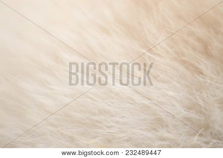 An Abstract Fair Coloured Fluffy Silk Texture