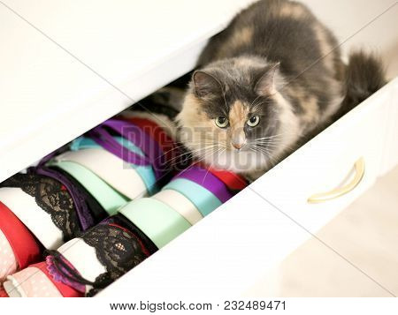 A Fluffy Cat Is Sitting In An Opened Cupboard With Lingerie.