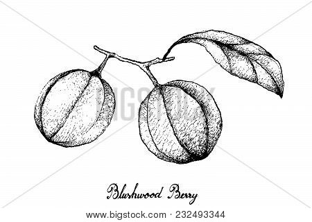 Berry Fruit, Illustration Hand Drawn Sketch of Cranberries Isolated on White Background. High in Vitamin K, Vitamin C, Vitamin B and Minerals Tablet, Essential Nutrient for Life. poster
