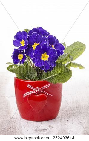 Red Bowl With Heart And Purple Primroses On The Light Wooden Background