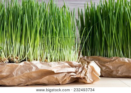 Fresh Homegrown Young Wheatgrass On A Table