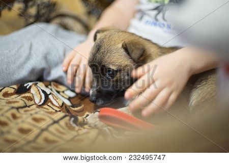 The Puppy Looks Scared. There Is Small Boy Sits Next To The Pet. We Can See Only His Hands. Boy Is S