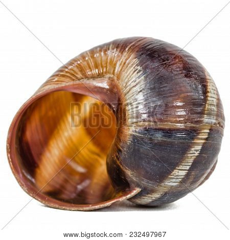 Spiral Shell Of Snail, Isolated On White Background