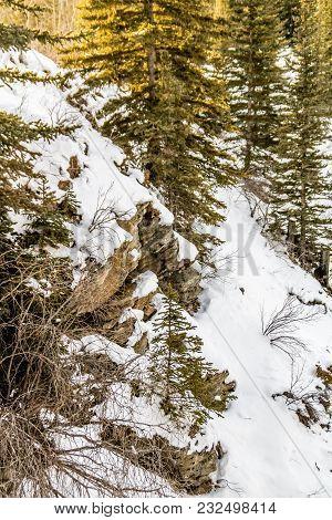 Eerie Winter Morning, North Ghost Provincial Recreation Area, Alberta, Canada