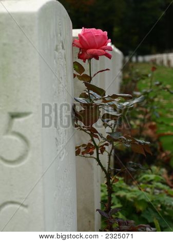 Soldiers Grave At The Woii Cemetary In Oosterbeek, The Netherlands
