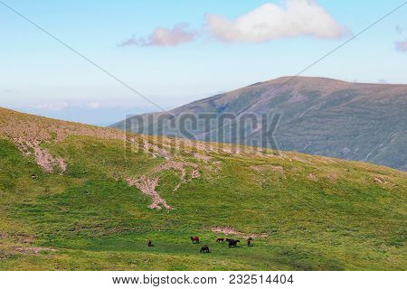 Wild Mountain Valley With Grassy Slopes. In The Alpine Meadow,a Herd Of Horses Is Grazing.view From