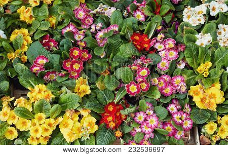 Beautiful bunch of colorful flowers displayed at market stall.