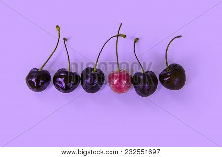 Ripe Juicy Cherries In A Row, One Berry Of Another Color, Red / Violet Tones, Selection Of Cherries