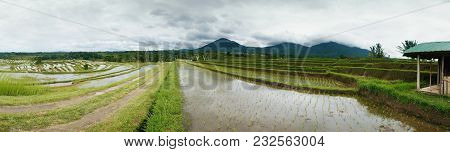 Rice Field On Terrace In Bali Indonesia. Panoramic View