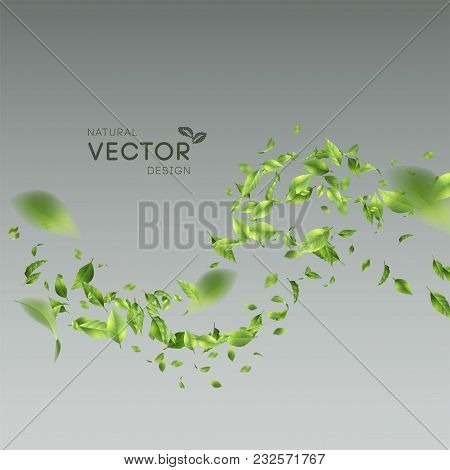 Vector Abstract Foliage Background. Green Flying Leaves