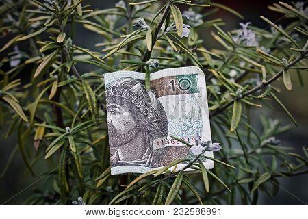 Polish Money And Rosemary