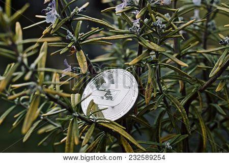 Silver Dashcoin Rosemary