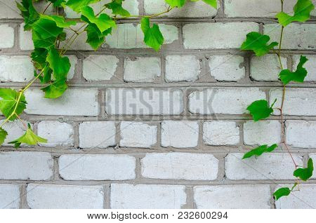 Brick Wall With Vignette Of Grapes. Horizontal Frame