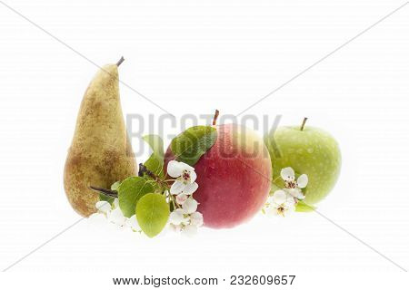 The Apple And The Pear Tree . Fresh Fruits With The Twig Of An Apple Tree In Bloom.  Composition Of