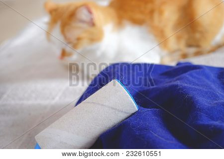 Cat Shedding, Lint Remover And Blue Clothes Full Of Animal's Hair