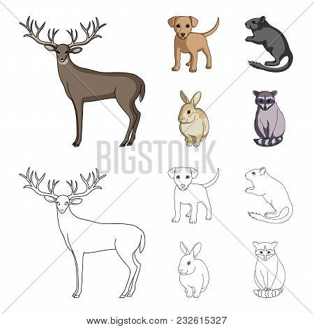 Puppy, Rodent, Rabbit And Other Animal Species.animals Set Collection Icons In Cartoon, Outline Styl