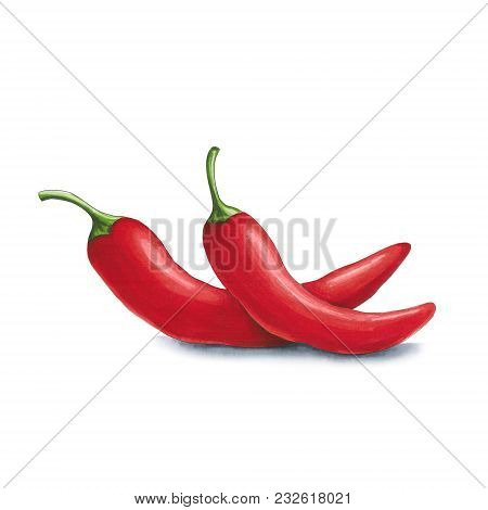 Chili Pepper On A White Background. Sketch Done In Alcohol Markers. You Can Use For Greeting Cards,