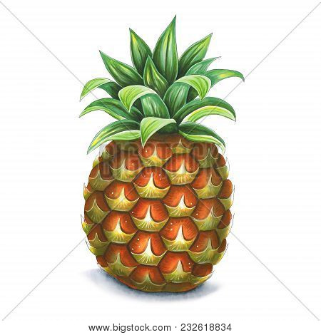 Pineapple On A White Background. Sketch Done In Alcohol Markets. You Can Use For Greeting Cards, Pos