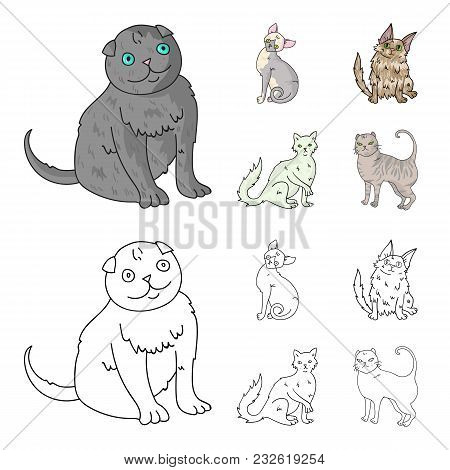 Turkish Angora, British Longhair And Other Species. Cat Breeds Set Collection Icons In Cartoon, Outl
