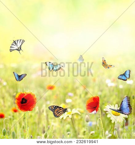 Beautiful Flowery Meadow In Summer With Pastel Colors And Many Colorful Butterflies Fly On A Beautif