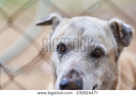 Dog Eyes Behind Net Close Up. Guard Dog Portrait