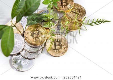 Conceptual Cryptocurrency Bitcoin With Plant Growing From Within Bitcoins.