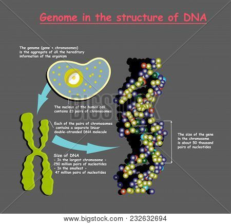 Genome 3d In The Structure Of Dna On Gray Background. Genome Sequence. Nucleotide, Phosphate, Sugar,