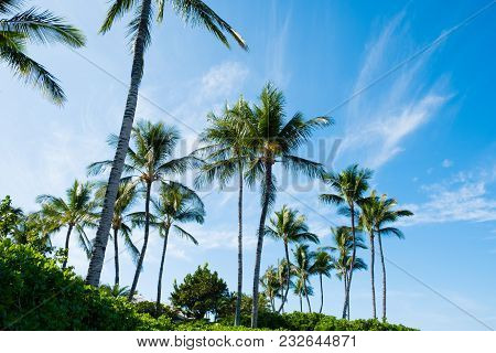 Palm Trees And Bright Blue Sky On A Nice Day On The Big Island Of Hawaii.