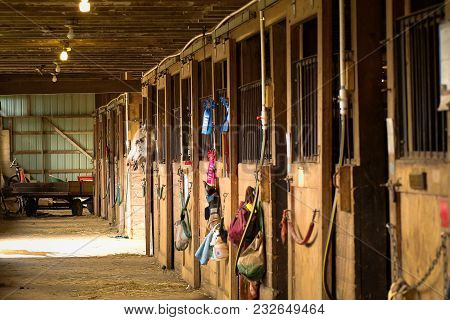 Horse Peeking Out Of Stall In Barn