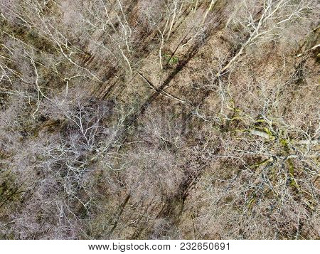 Aerial above winter forest clearing silver birch trees bleak rural countryside