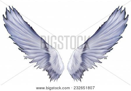 Angel Wings Digitally Painted And Isolated Ready To Use.
