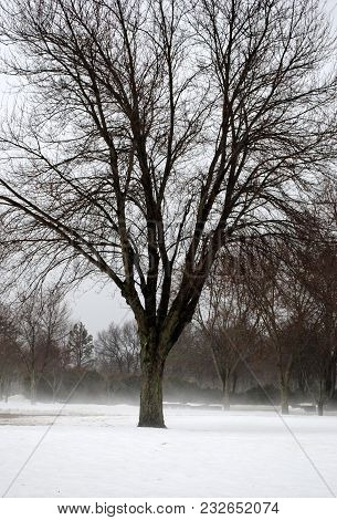 A Tree In The Middle Of Winter And Snow, With Fog Rising From The Snow.