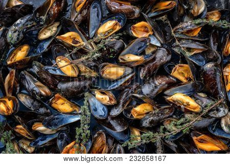 Traditional barbecue Italian blue mussel with rosemary in white wine as top view on a tray