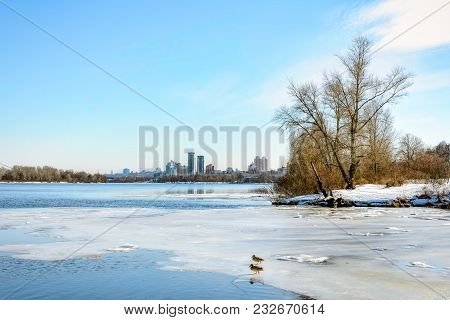 View Of Willow Trees And Poplars Close To The River In Kiev During Winter.buildings In The Backgroun