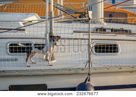 Cute Dog On Board Luxury Yacht Deck Little Doggy On A Sailing Boat