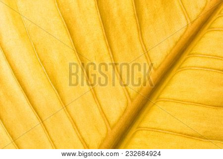 Abstract Gold Leaves Texture Use For Background