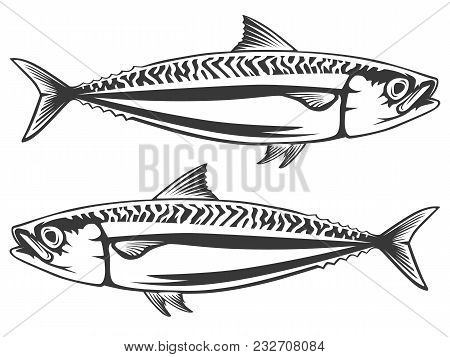 Mackerel sea fish isolated sketch. Atlantic mackerel predatory fish with silver blue body and wavy b