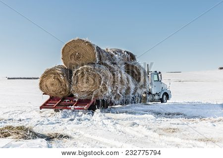 Horizontal Image Of A Big Transport Truck With Round Hay Bales Stacked On The Flatbed Waiting To Be