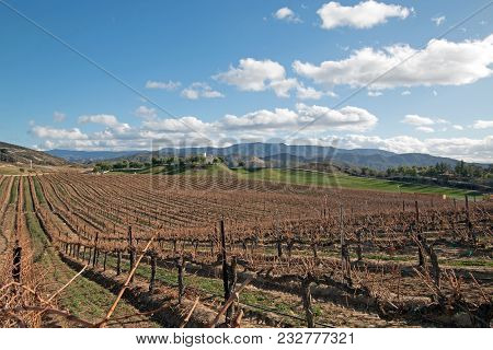 Vineyard In Temecula In Southern California In The United States