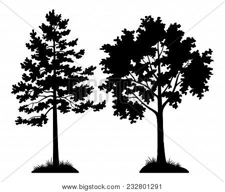 Set Of Silhouette Forest Trees, Pine And Maple, Black Pictogram Elements Isolated On White Backgroun