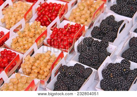 Red Currant, White Currant And Blackberries In The Market Are In Trays.