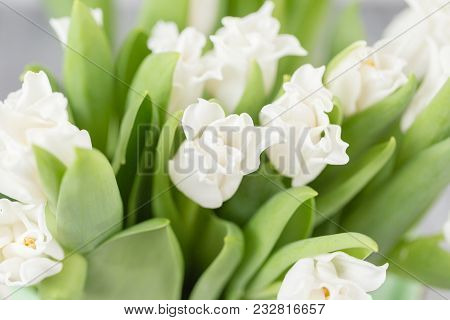 Tulips Of White Color In Green Vase. Floral Natural Backdrop. Unusual Flowers, Unlike The Others