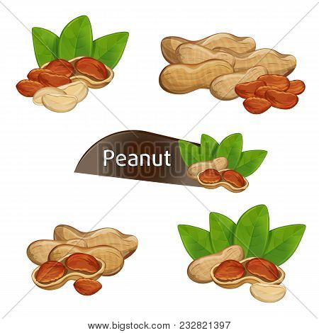 Peanut Kernel In Nutshell With Green Leaves Set Isolated On White Background Illustration. Organic F